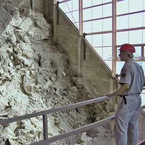 Person stands on the mezzanine inside the original quarry building, looking at the fossils in the quarry face.