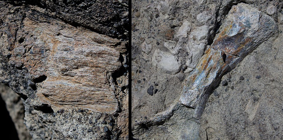 Collage of two photos showing fragments of fossils encased in a grayish rock. Left image is non-descript, squarish fragment. Right image is of a small leg bone.