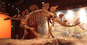 Exhibit in the Utah Field House of Natural History State Park Museum