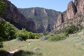 Jones Hole Trail surrounded by canyon walls.