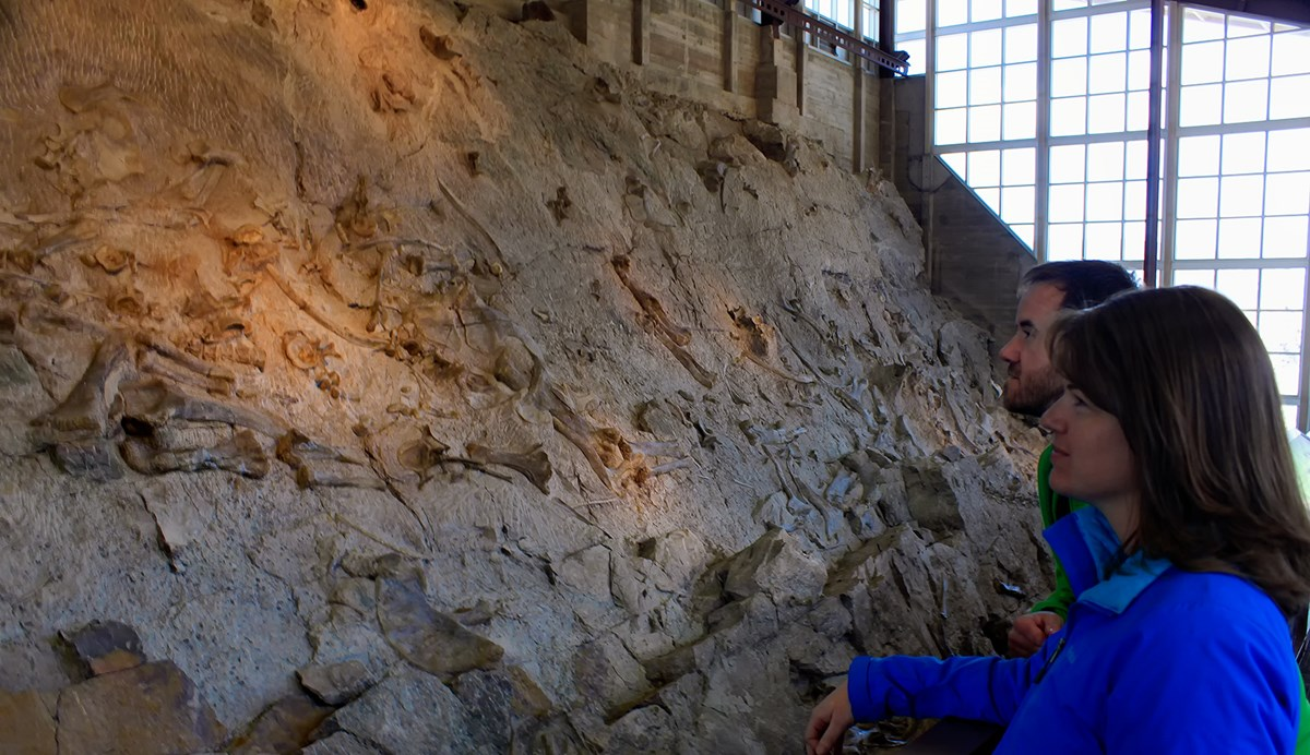 A man and woman looking at a rock cliff filled with dinosaur bones