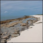 Beachrock on Loggerhead Key