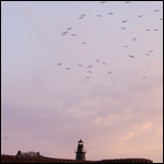 Birds flying over Fort Jefferson on Garden Key