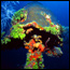 Learn about coral and coral reefs