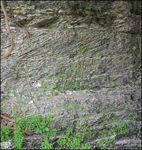Alternating fine- and coarse-grained layers in the cross-bedded Miami Limestone