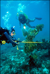 Research divers measure coral at Dry Tortugas National Park