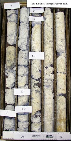 Sediment core from Dry Tortugas National Park containing the Key Largo Limestone