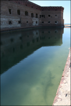 American crocodile in the Fort Jefferson moat