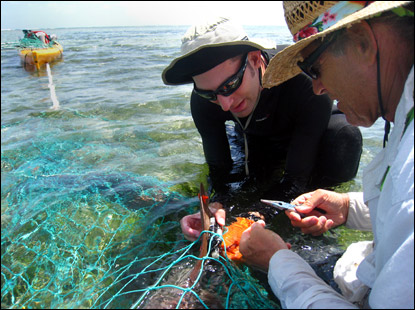 Nick and Wes release a tagged nurse shark