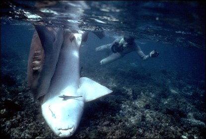 Photographing nurse sharks