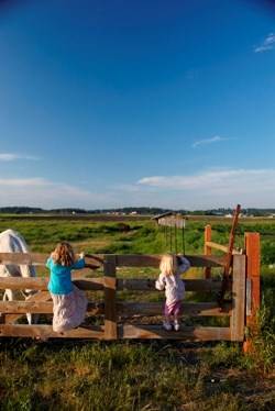 Children standing on wood fence looking at horse in field.