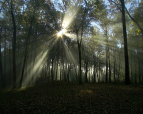 Sunrise in the Forest at Effigy Mounds
