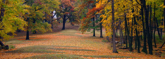 Mounds in Fall