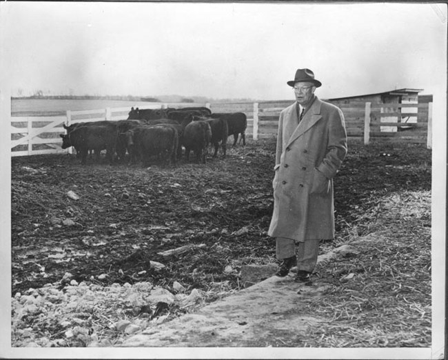 Eisenhower standing in the cow pen.