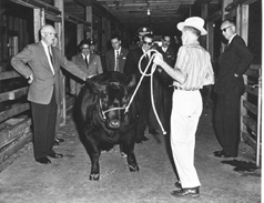 Eisenhower and President Mateos inspecting prize winning cattle.