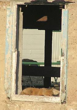 A red fox sleeps in the window of the Eisenhower barn .