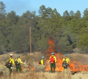 Wildland firefighters monitor the effects of a prescribed burn in a meadow.