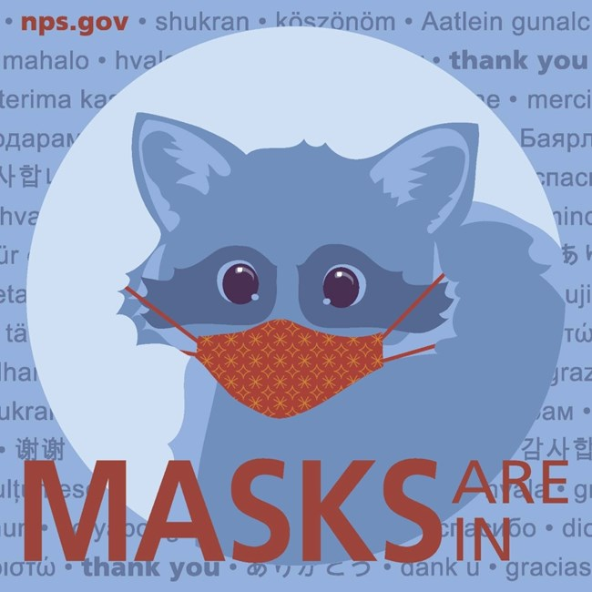 "Graphic of a raccoon wearing a face mask with the words ""Masks are in"""