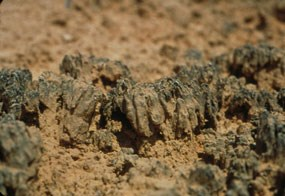 Cryptobiotic Soil