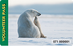 picture of a polar bear sitting in snow