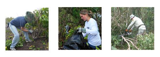 Volunteers Removing Invasive Species