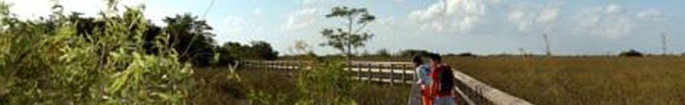 Boardwalk Everglades National Park