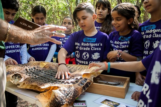 students stand around table and touch alligator skin