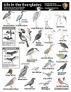 Everglades ID Sheet