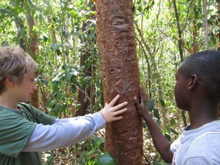 Students touch a gumbo limbo tree