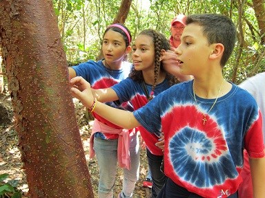 three children feel the bark on a tree