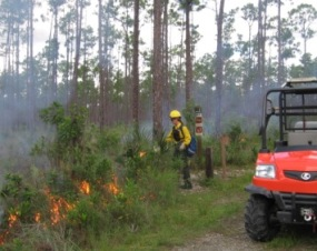 Firefighter Setting Prescribed Fire