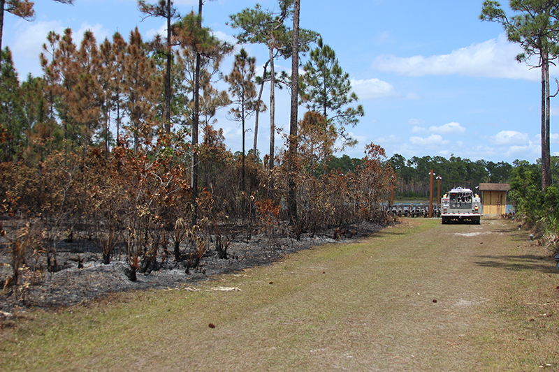 A fire truck parked in a paved road in the pine rocklands
