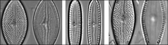 Sampling of Diatoms