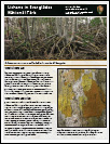 Lichens in Everglades Fact Sheet Thumbnail
