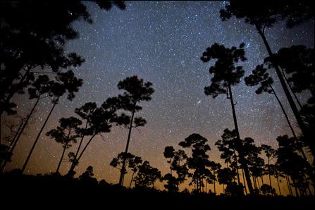 Lightscape Night Sky Everglades National Park U S