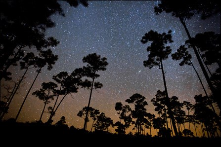 Starry skies in the Pinelands