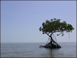 Mangrove tree island in the Ten Thousand Islands