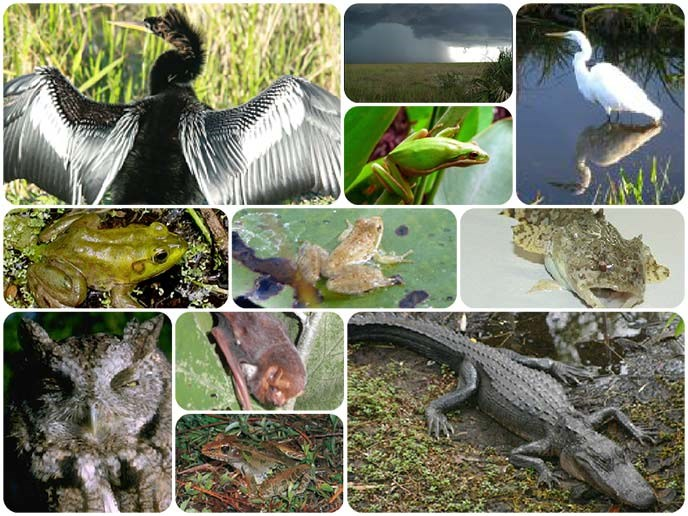 Various sources of sound in the Everglades
