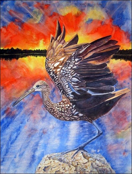 """The Night Screamer in the Everglades,"" a watercolor painting by Nature Illustrator and Artist Kathleen Konicek-Moran"