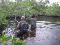 Researchers use radio receivers to track pythons in the Everglades.