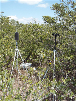 North Nest Key acoustic monitoring site