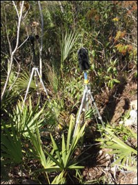 Pinelands acoustic monitoring site