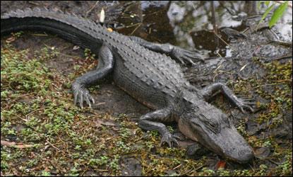 crocodile clips gratuit sur 01net
