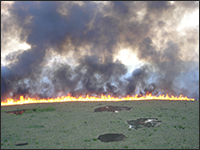 Fire burning in Everglades National Park