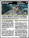 Dry Tortugas Natural Resources Fact Sheet