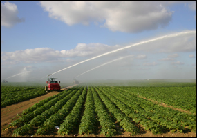 Photograph showing sprinkler irrigation of an agricultural field.