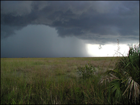 Summer thunderstorm over the Everglades