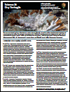 Science at Dry Tortugas Fact Sheet Thumbnail