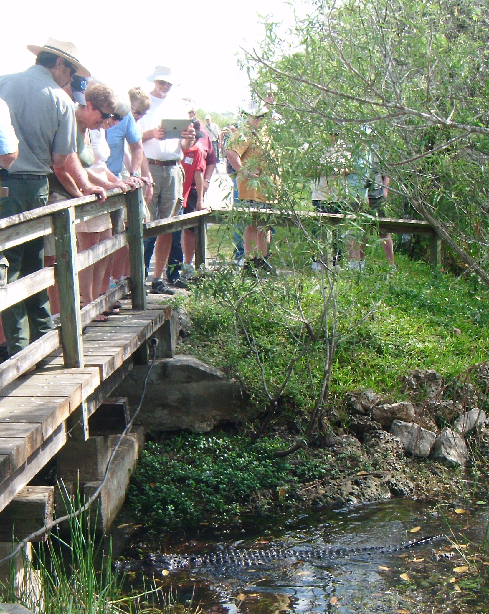 Visitors watch wildlife at the Everglades