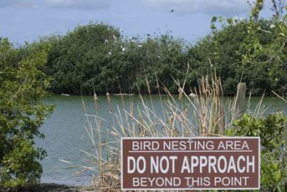 Paurotis Pond Closed for Nesting Season 2013